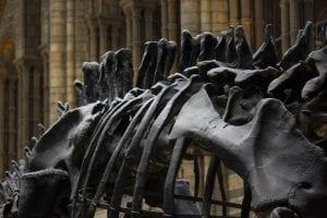 10 Strangest Freight Cargos Ever: Dinosaur skeleton