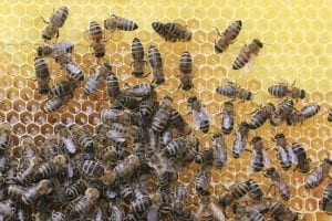 10 Strangest Freight Cargos Ever: Bees